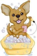 chihuahua dog shampoo